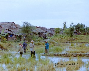 Working in the rice paddy next to the camp